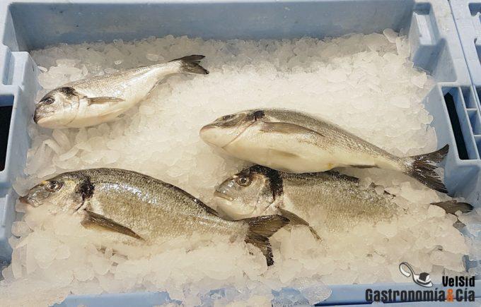 Contaminación del pescado con nanoplásticos