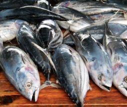 Trabajo esclavo en la industria pesquera de Taiwán