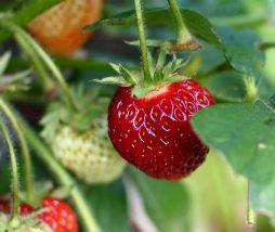Test para el consumo de frutas y verduras