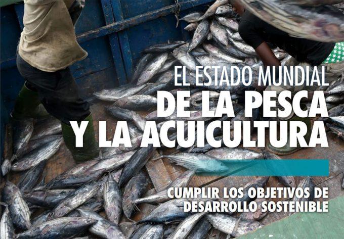 Informe SOFIA de la FAO