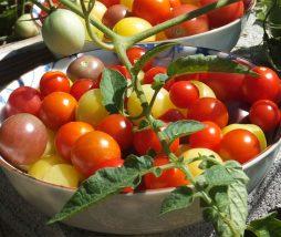 Impacto ambiental por seguir una dieta con alimentos vegetales