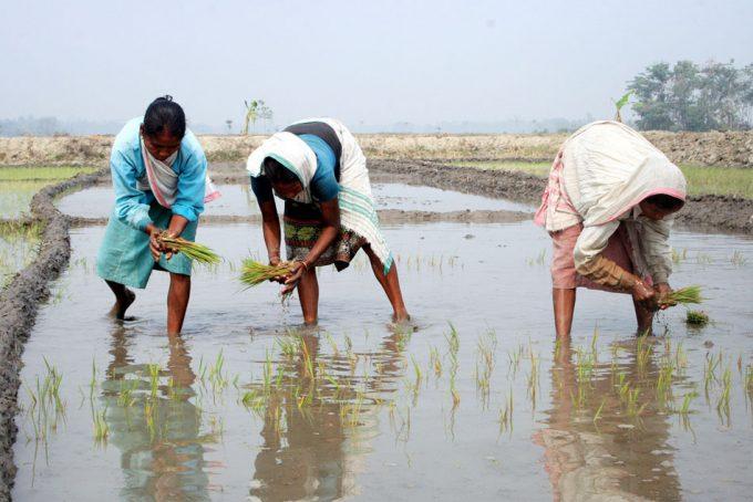 El aumento de los gases de efecto invernadero reducirá el contenido en nutrientes de los alimentos
