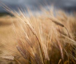 Relación entre la huella hídrica y los alimentos de la dieta