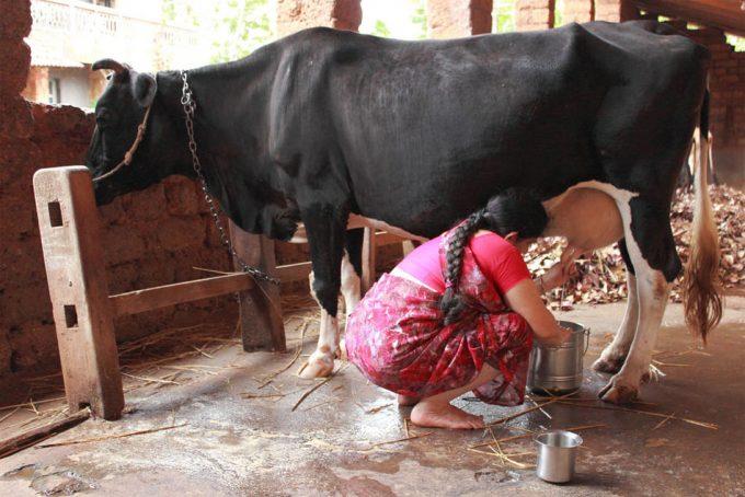 Fraude alimentario en la India