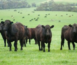 ¿Cuál es el espacio operativo seguro para la ganadería de la UE?