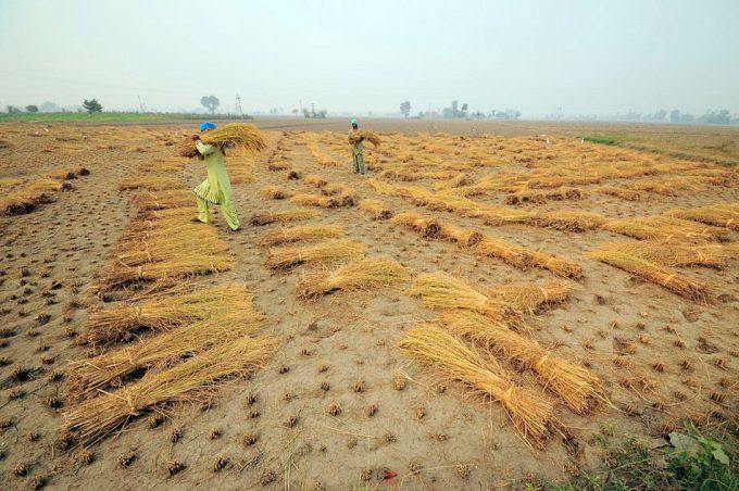 Medidas para garantizar la seguridad alimentaria en 2050