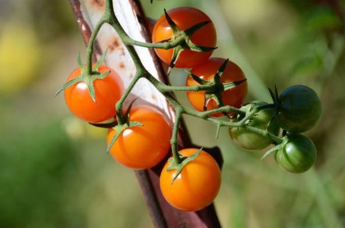 Una dieta con alimentos ecológicos mejora la salud