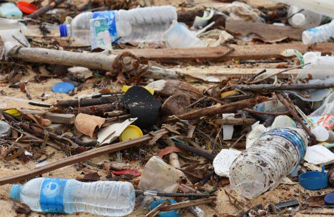 Los peces y otras especies de agua dulce ingieren microplásticos