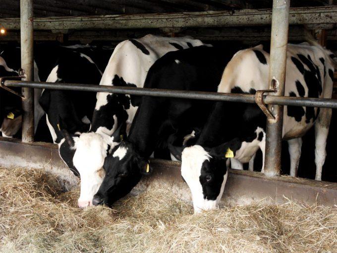 Uso de antibióticos en la agricultura y la ganadería
