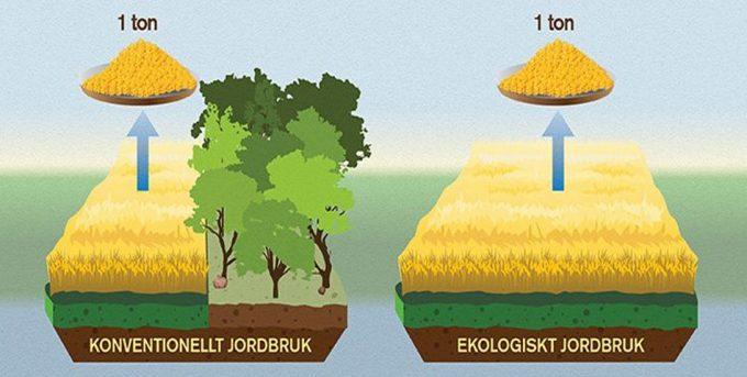 Alimentos ecológicos y deforestación