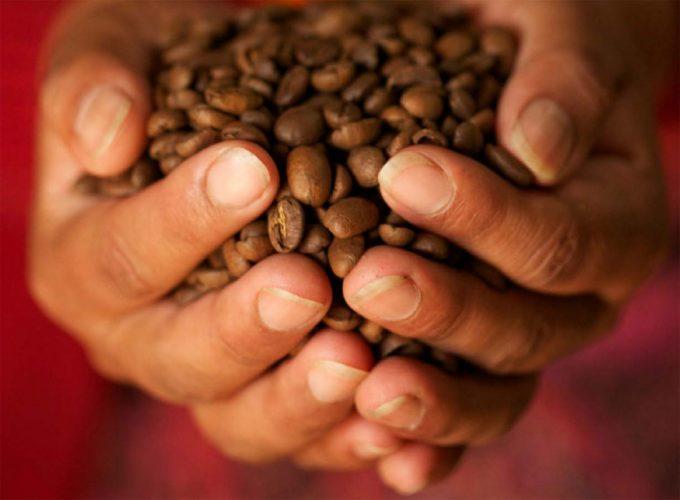 Cambio climático y producción de café