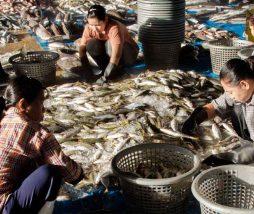 Pesca ilegal no declarada y no reglamentada