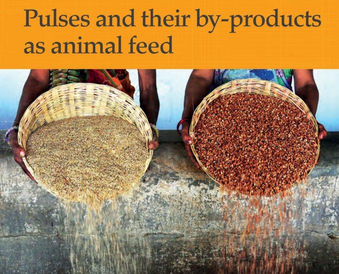 Legumbres para la alimentación animal