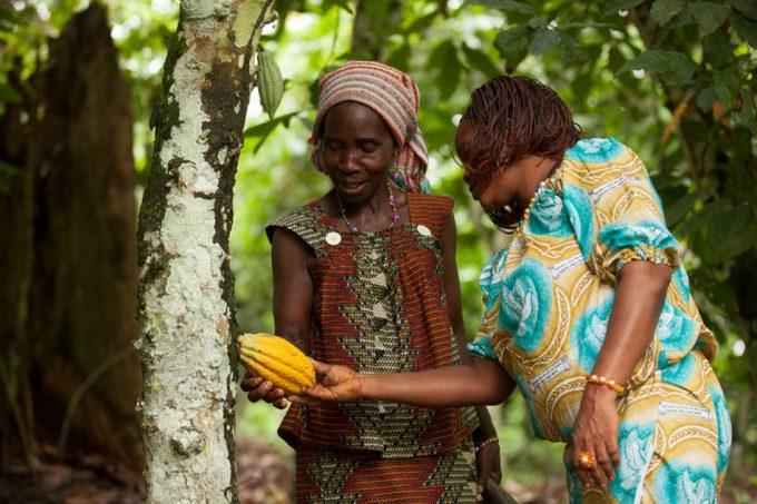Trazabilidad y sostenibilidad en el cacao