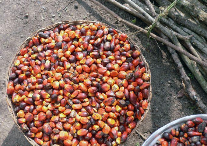 Alimentos con aceite de palma y su impacto ambiental