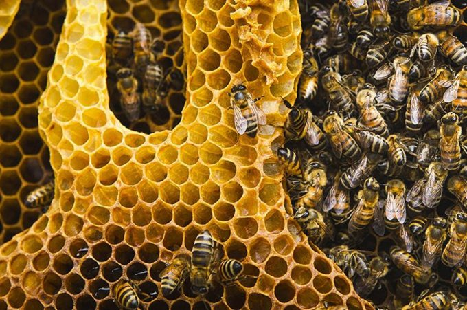 Proteger a las abejas para proteger la seguridad alimentaria