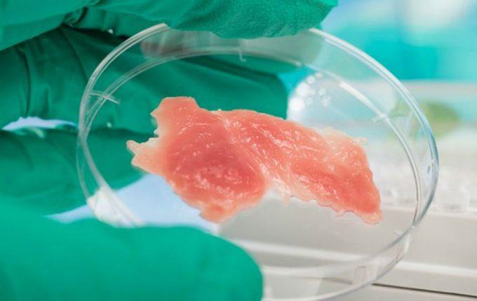 carne de insecto de cultivo celular