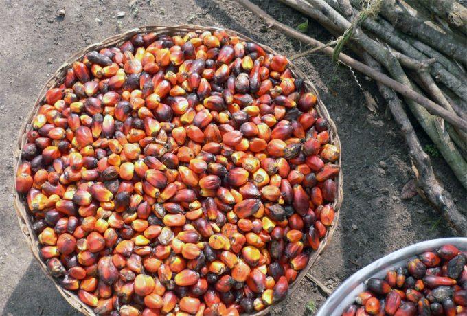 Sostenibilidad del aceite de palma