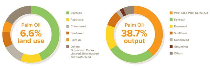 Rendimiento del aceite de palma