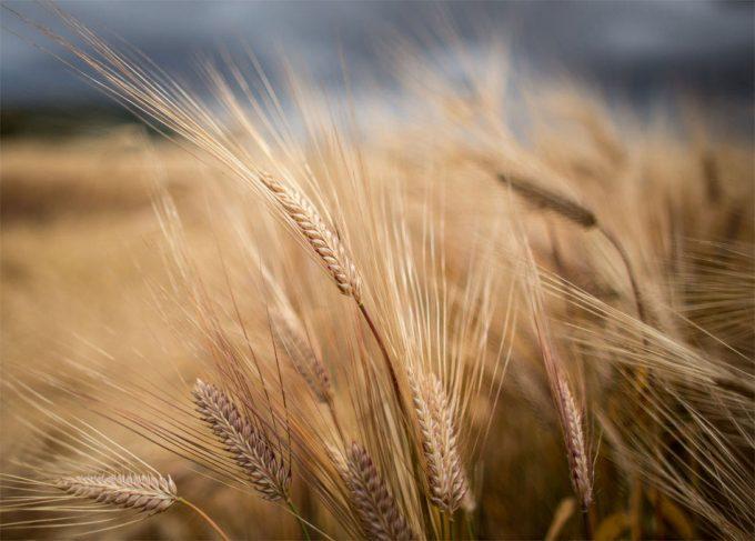 Proteger la biodiversidad con un cambio en las dietas