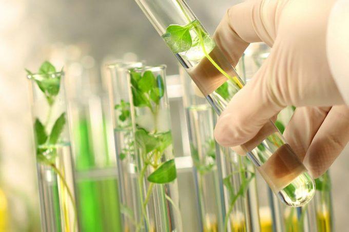 Informe del Servicio Internacional para la Adquisición de Aplicaciones Agro-biotecnológicas