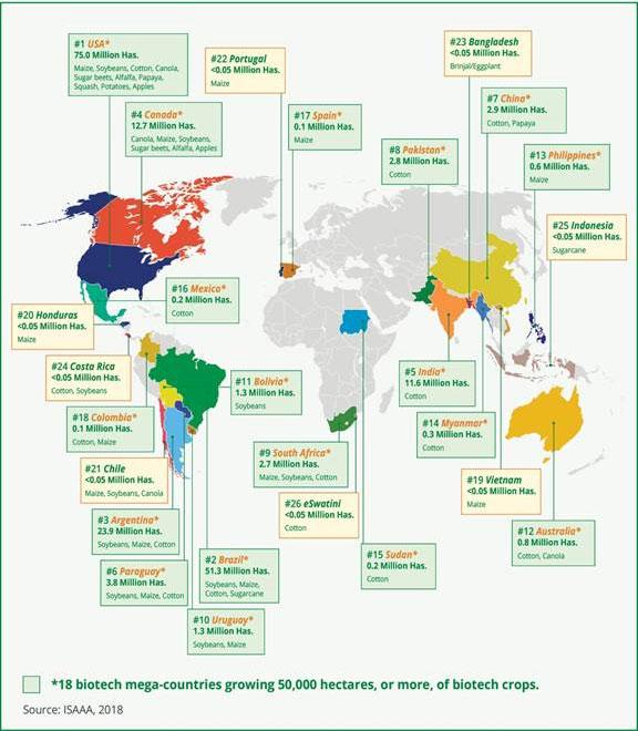 Países productores de alimentos transgénicos