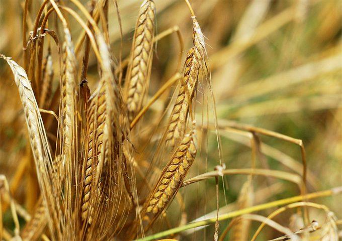 Impacto en el medioambiente de la producción alimentaria