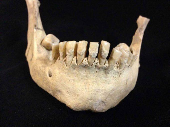 Investigación arqueológica para conocer el origen del consumo de leche