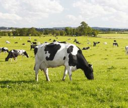 Sustainable Dairy Partnership