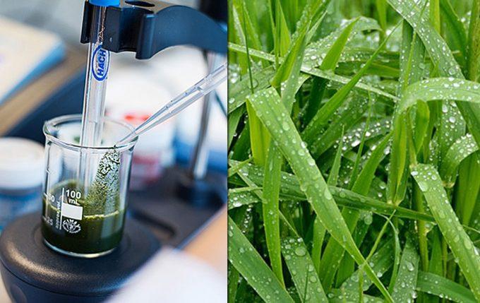 Proteínas alimentarias producidas a partir de la hierba