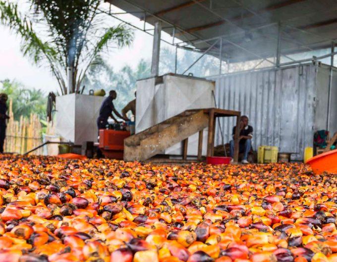 certificado aceite de palma sostenible