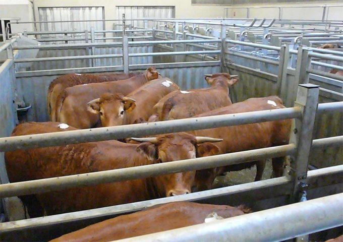 Reducir el consumo de carne para mejorar la salud humana y del planeta