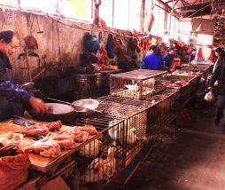 Comercialización de especies salvajes en los mercados