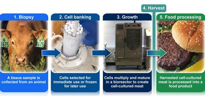Carne a base de células