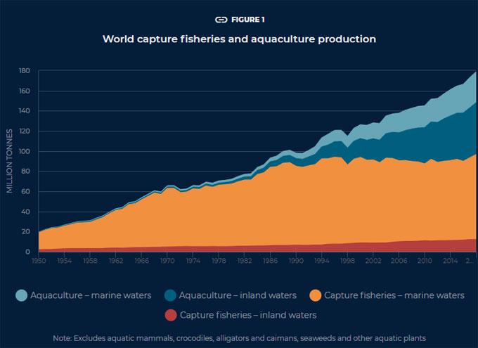 Informe sobre la pesca y la acuicultura de la FAO