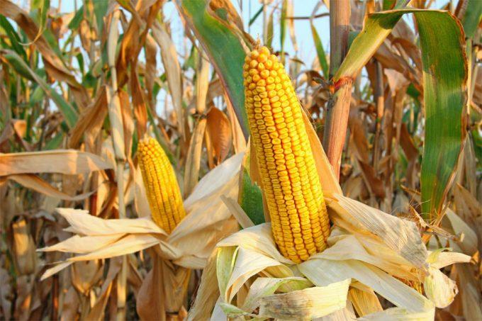 Riesgos sobre la seguridad alimentaria
