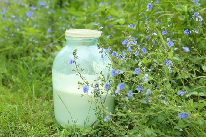 Bacterias resistentes a los antibióticos en la leche