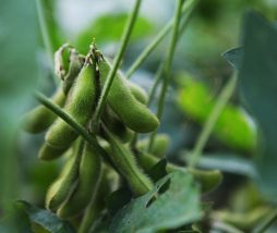 Deforestación y producción de soja