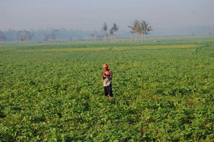 Producción de soja en Brasil