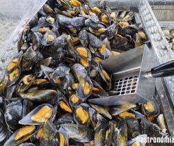 Nanoplásticos en los alimentos marinos