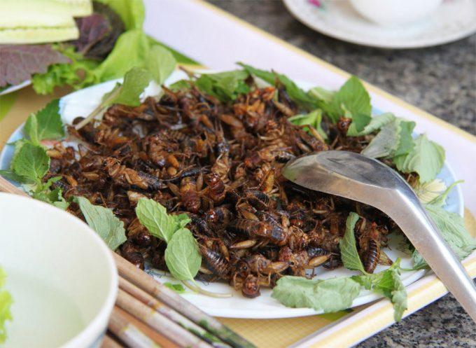 Nuevos alimentos con insectos comestibles