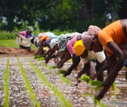 Mejorar la producción y acceso a los alimentos