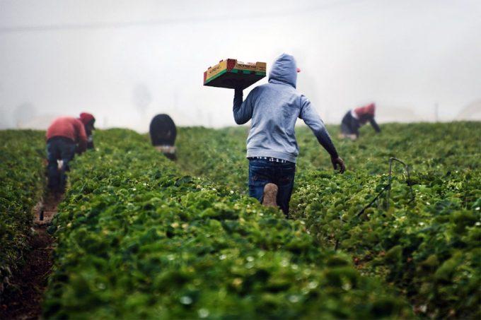 Acciones para mejorar la seguridad alimentaria