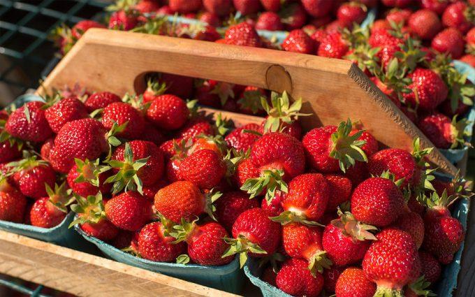 Conservar fresas
