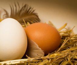 Caducidad de los huevos