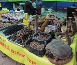 Mercados de animales salvajes