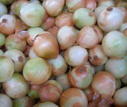 Precio de las cebollas en mayo 2021