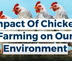 Contaminación de la producción avícola