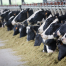 Alimentos y gases de efecto invernadero